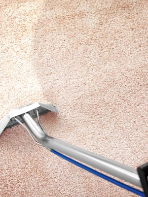 Removing dirt from carpet with professional vacuum cleaner indoors